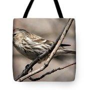 Common Redpoll Tote Bag