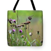 Common Redpoll In A Field Of Thistle Tote Bag