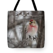 Common Redpoll - Sizerin Flamme - Acanthis Flammea Tote Bag