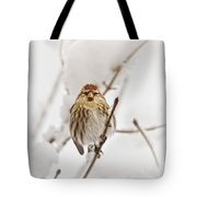 Common Redpoll Tote Bag