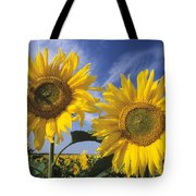 Common Sunflower Field Tote Bag