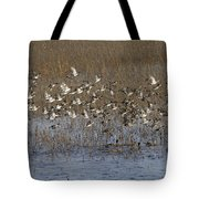 Common Teal Anas Crecca Tote Bag