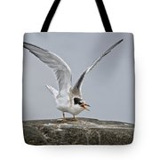 Common Tern Pictures 34 Tote Bag