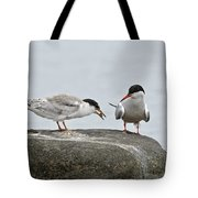 Common Tern Pictures 39 Tote Bag