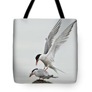 Common Tern Pictures 40 Tote Bag