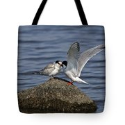 Common Tern Pictures 48 Tote Bag