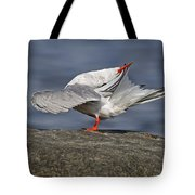 Common Tern Pictures 51 Tote Bag
