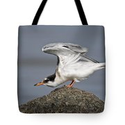 Common Tern Pictures 67 Tote Bag