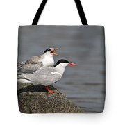 Common Tern Pictures 76 Tote Bag