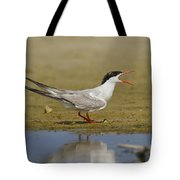 Common Tern Sterna Hirundo Tote Bag by Eyal Bartov