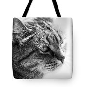 Concentrating Cat Tote Bag