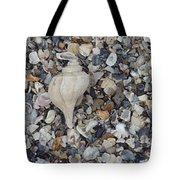 Conch Among A Sea Of Shells Tote Bag