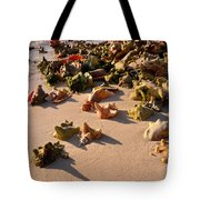 Conch Collection Tote Bag