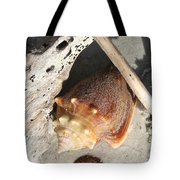 Conchs With Driftwood I Tote Bag
