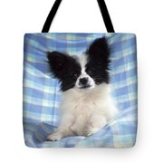 Continetal Toy Spaniel Or Papillon Dog Tote Bag