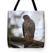 Cooper's  Hawk Dines Here Tote Bag