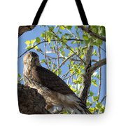Cooper's Hawk In A Cottonwood Tote Bag
