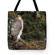 Coopers Hawk In Predator Mode Tote Bag