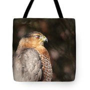 Coopers Hawk In Profile Tote Bag