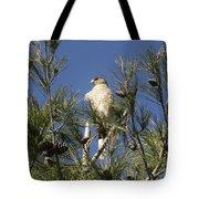 Coopers Hawk In Tree Tote Bag