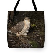 Coopers Hawk Pictures 135 Tote Bag