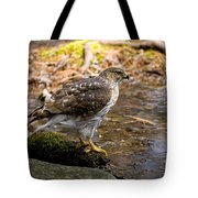 Coopers Hawk Pictures 61 Tote Bag