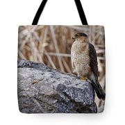 Coopers Hawk Pictures 91 Tote Bag