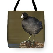 Coot On A Log Tote Bag