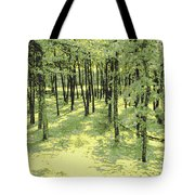 Copse Of Trees Sunlight Tote Bag