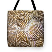 Coral Closeup Tote Bag