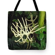 White Palm Flower In Costa Rica Tote Bag