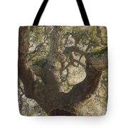 Cork Oak Tree Tote Bag