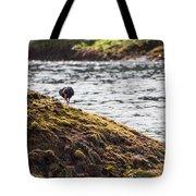 Cormorant - Montague Island - Australia Tote Bag