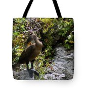 Cormorants-one Tote Bag