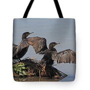 Cormorants Sunbathing Tote Bag