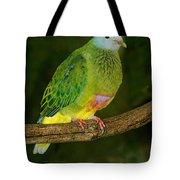 Coronated Fruit Dove Tote Bag