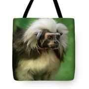 Cotton-top Contemplation Tote Bag
