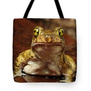 Couchs Spadefoot Toad Tote Bag