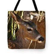 Coues White-tailed Deer - Sonora Desert Museum - Arizona Tote Bag