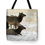 Cow Elk   #0460 Tote Bag