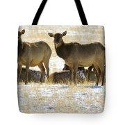 Cow Elk   #0479 Tote Bag