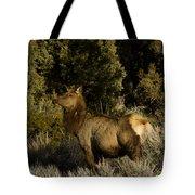 Cow Elk   #7582 Tote Bag