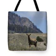 Cow Elk   #9488 Tote Bag