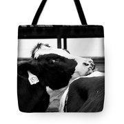 Cow Just Resting His Chin Tote Bag