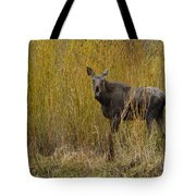 Cow Moose   #1638 Tote Bag