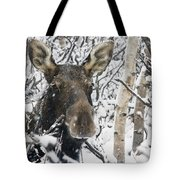Cow Moose Among Snow Covered Trees In Tote Bag