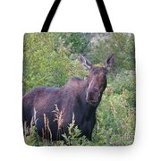 Cow Moose Portrait Tote Bag