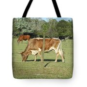 Cows Grazing Tote Bag