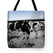 Cows Three In One Tote Bag