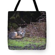 Coyote Curled Up Tote Bag